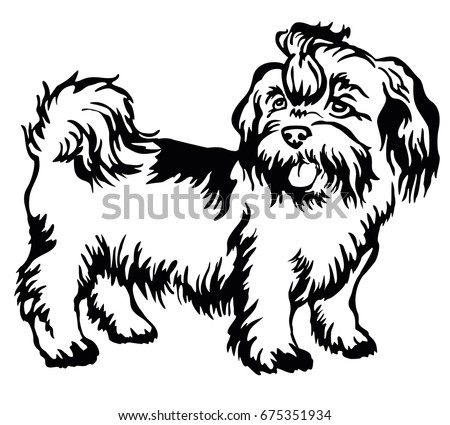 Dog Black And White Shi Tzu Clipart