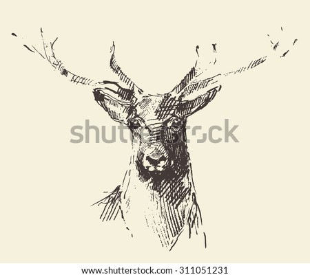 Deer head engraving style, vintage illustration, hand drawn, sketch - stock vector