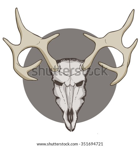 Deer skull. Graphic vector colorful illustration.