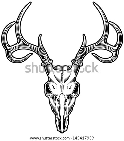 Deer Skull Vector - stock vector