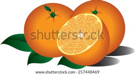 delicious, juicy orange oranges. vector illyustratsyya - stock vector