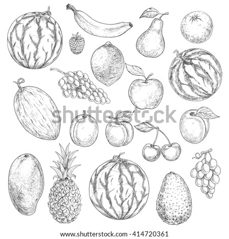 Delicious summer fruits vintage engraving sketches with orange, apple, grape, banana, lemon, pear, mango, pineapple, peach, raspberry, watermelons, avocado, cherry, plum, melon and apricot