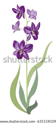 Dendrobium phalaenopsis orchid, purple flowers, green stem and leaves on white background, digital draw, vector botanical illustration for design