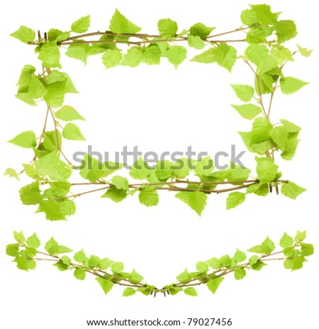 Design with green birch leaves, vector illustration