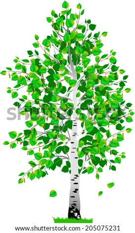 detached tree birch with leaves on a white background - stock vector