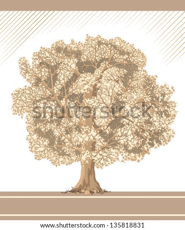 Detailed graphic vector tree like sepia and pencil drawing (see jpg version in my portfolio)