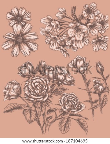 Detailed Sketchbook Hand Drawn Flower Set - stock vector