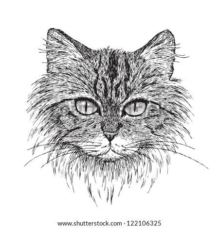 Detailed vector from my pen & ink drawing of a tabby cat. - stock vector