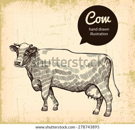 detailed vector sketch of cow on background - stock vector