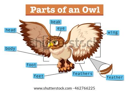 Owl Eyes & Vision