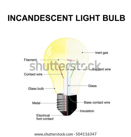 diagram showing parts modern incandescent light stock vector rh shutterstock com Plant Bulb Diagram Plant Bulb Diagram