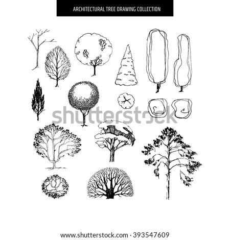different hand drawn trees isolated on white background sketch architectural drawing style trees set - Architecture Drawing Of Trees