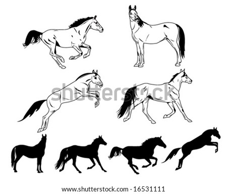 different horses silhouettes isolated on white