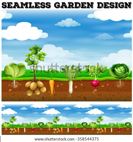 Different kind of vegetables in the garden illustration - stock vector