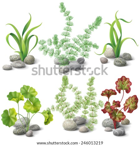 Different kinds of algae and pebbles set isolated on white. - stock vector