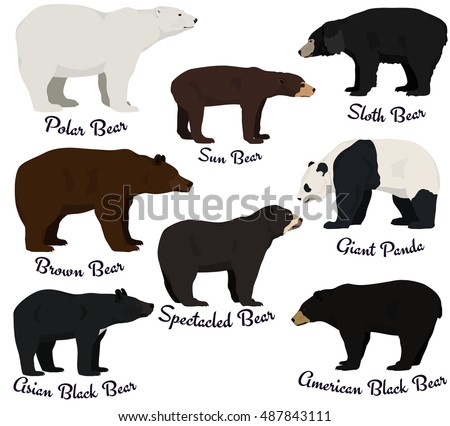 Different Species Of Bears Vector Illustration Eight Bear Species Of The World