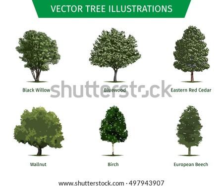 different tree sorts names illustrations tree stock vector leaves logo leaf logo vector