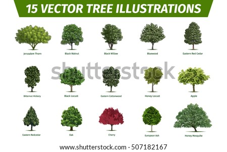 The Gallery For Shapes Of Leaves And Their Names
