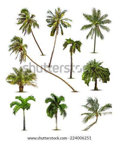 Different tropical palm trees. Vector - stock vector