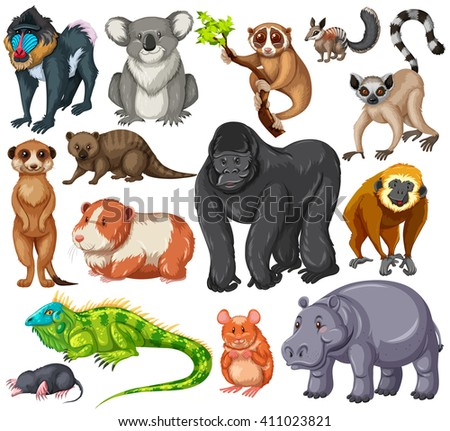 Different type of wildlife animals on white background illustration - stock vector