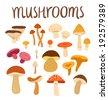 Different types of mushrooms set, vector illustration - stock