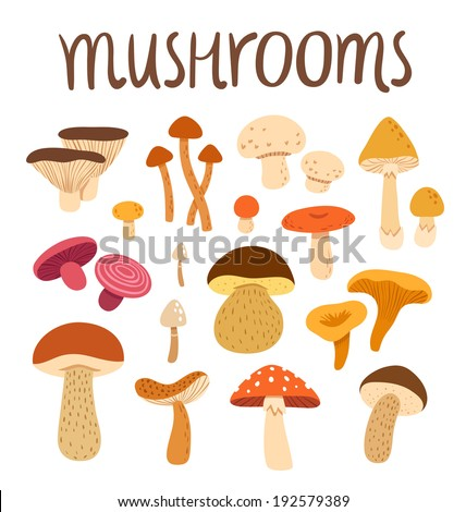 Different types of mushrooms set, vector illustration - stock vector