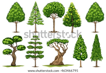 Different types of trees illustration