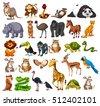 different types of wild animals ...