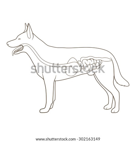 animal digestive system stock photos images  pictures