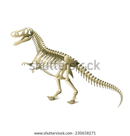 Dinosaur skeleton isolated on white photo-realistic vector illustration