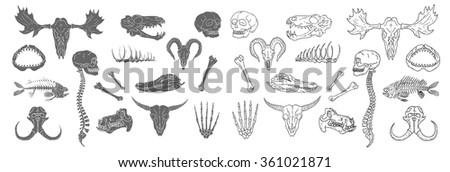 Diverse Skulls and Bones Set. Isolated on white background. - stock vector