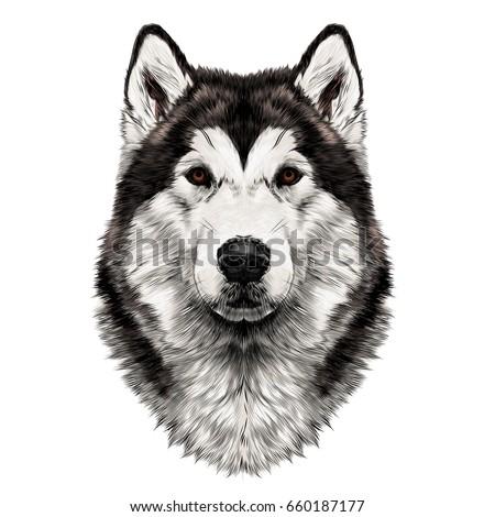 Dog Breed Alaskan Malamute Head Symmetry Vector de stock660187177 ...