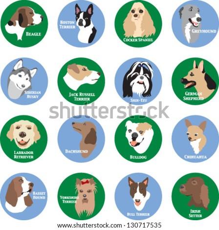 Dog Breeds - stock vector