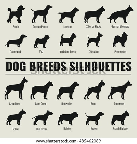 Dog Breeds Stock Images, Royalty-Free Images & Vectors | Shutterstock
