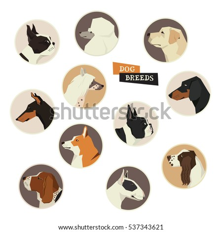 Dog collection. Vector set of 11 dog breeds. Modern Geometric style icon round