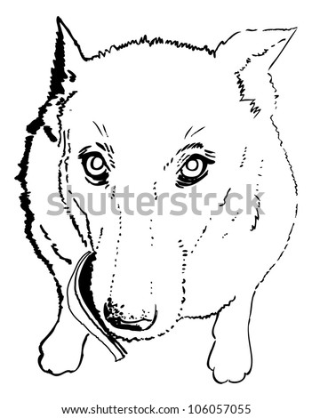 Dog, cute and loyal friend, vector illustration - stock vector
