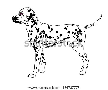 Dog,dalmatian breed,vector isolated on white background.  - stock vector