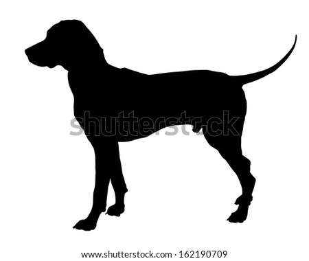 Dog,dalmatian breed,vector silhouette isolated on white background. Black silhouette od hunter dog. - stock vector