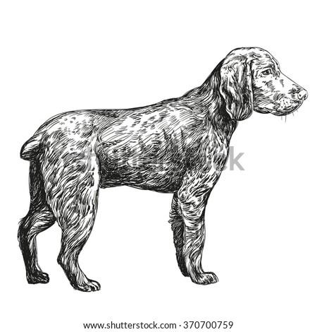 dog hunting hand drawn vector llustration realistic sketch - stock vector