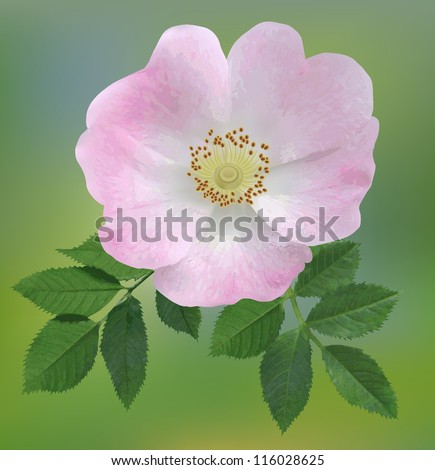 Dog-rose - stock vector