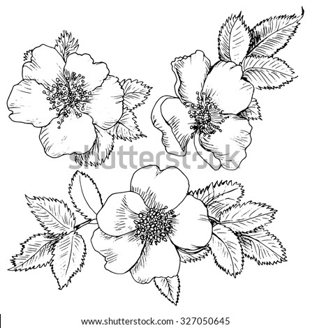 Rose sketch stock photos images pictures shutterstock Teach me how to draw a flower