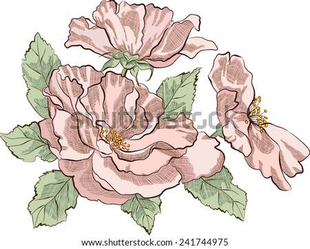 Dog rose isolated on white background - stock vector