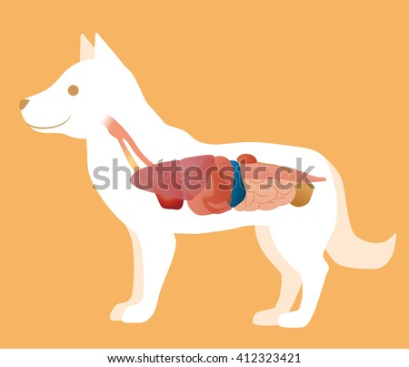 orthopedic dog diagram dog leg bones diagram animal internal organ stock images royalty free images #8