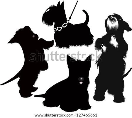 dog Scotch-Terje animal isolated - stock vector