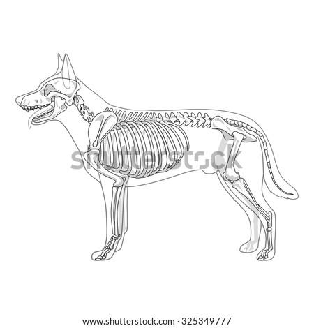 horse skull anatomy diagram bear skull anatomy diagram