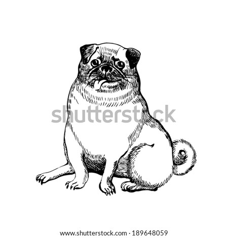 Dog, Vector hand drawing - stock vector
