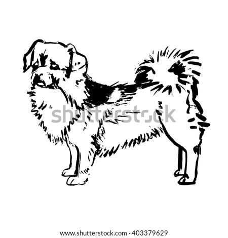 dog vector Pekingese - stock vector