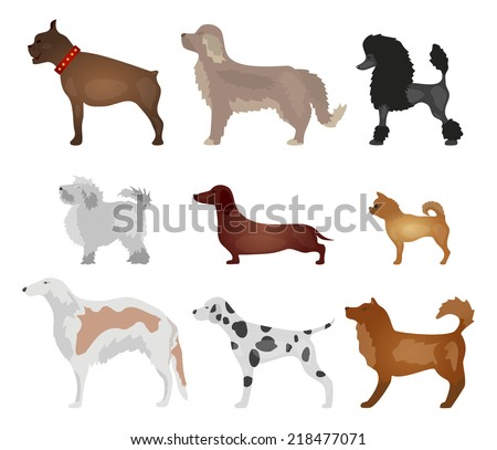 Dogs. Different breeds of dogs