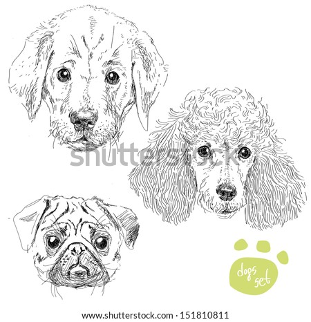 T65084 Adhesif De Reservoir besides Body Parts Symbolism likewise Dogs Head Set Pug Poodle Puppy Of Labrador Isolated Vector Illustration Hand Draw Realistic Style 366220 besides Stock Vector Poodle Vector besides 53 Skull Harley Davidson Sticker Autocollant. on ferrari symbol coloring page