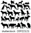 dogs silhouettes - vector - stock vector